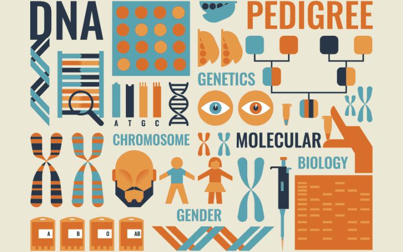 BSc Bioinformatics